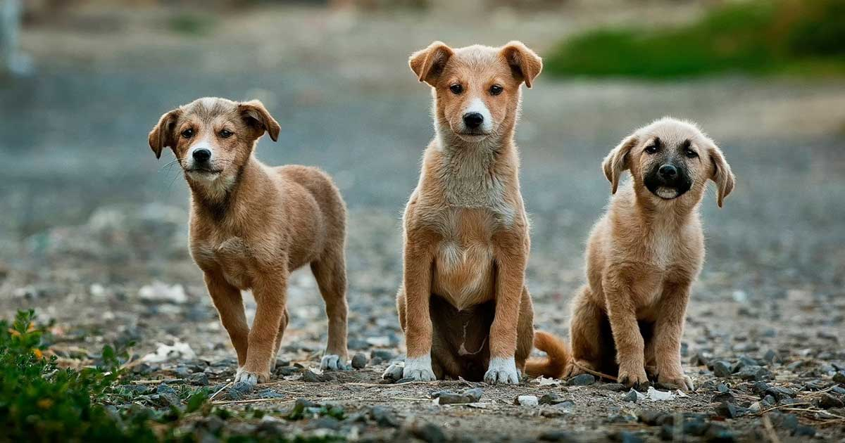 photo of adorable feral puppy dogs